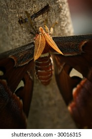 close up of large moth