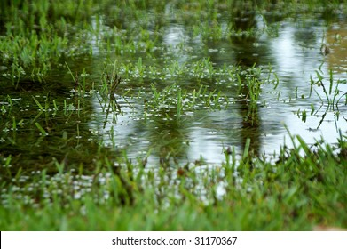 Close up of large puddle causes from heavy rain resulting in flooding of grass land.