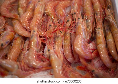 Close up of large Spanish prawns on display in a Spanish market