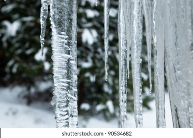 Close up of a large wavy icicle with more melting icicles beside it and a soft winter background.