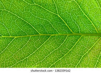 Close up leaf.  Macro photography.