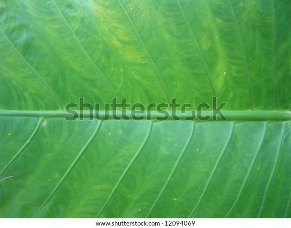 close up a leaf on a plant