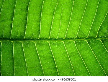 Close up of leaf texture background