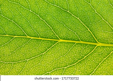 Close up leaf texture. Macro photography.