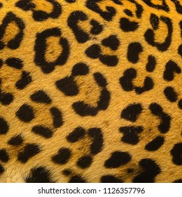 Close up leopard spot pattern texture background