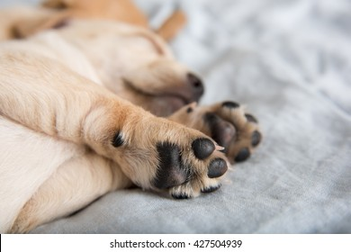 Close Up of Light Colored Puppy Paws
