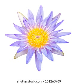 Close up light purple color blooming water lily or lotus flower isolated on white - with path