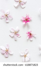 close up of light and soft sakura flower and green leaves behind on white background. Concept of love. feeling of spring. Dof on sacura flower. top view. Flat lay.