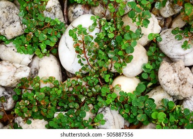 Close up of little tree plant on white stone floor.