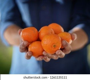 Close up of local farmer's hands holding organic oranges and clementines