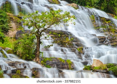 Close up lonely tree at Mae Ya Waterfall of Doi Inthanon National Park, Landmark waterfall in Chiangmai Thailand.
