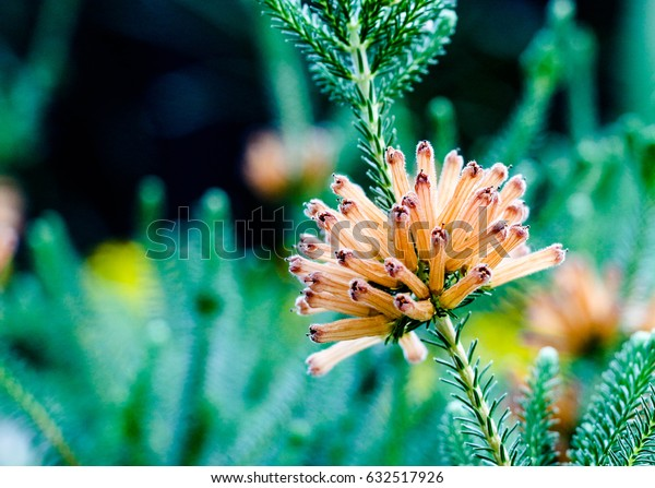 close up of long tube orange flower in a green background