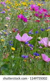 close look at multi colorful flowers in meadow at sunshine summer day in south germany countryside near schwaebisch gmuend city