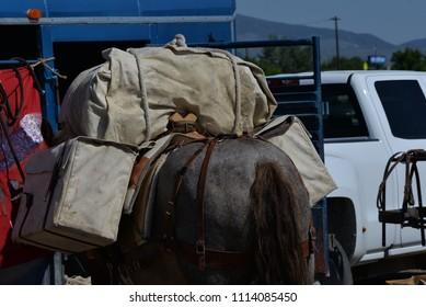 Close look of packs on a mule.