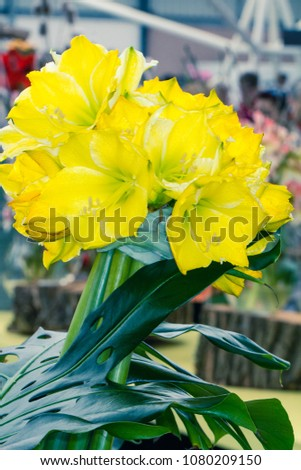 Close Look Vibrant Yellow Flowers Fresh Stock Photo Edit Now