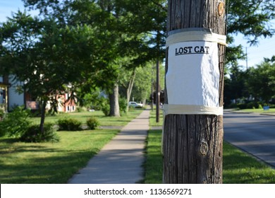 Close up of lost cat sign posted on a telephone pole in a residential area, sign left blank purposely for copy space and custom design layout.