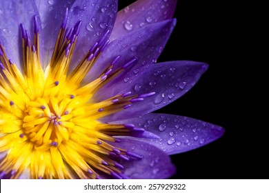Close up of lotus flower for conceptual purposes.