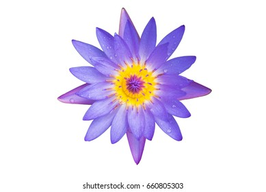 Close up lotus flower isolated Clipping Path.