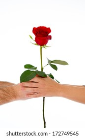 close up of a in love couple holding a single red rose on a white background