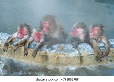 Close up Lovely monkeys in onsen Japan