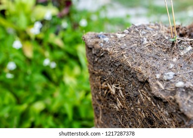 Close up The Lumps of soil used to be in pots shape in the trapezoid. Show the soil layer of the roots of the tree.