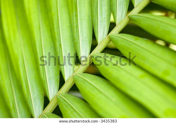 close up of lush green palm-leaf