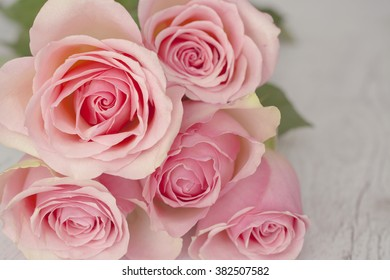 Close up macro background with pink roses