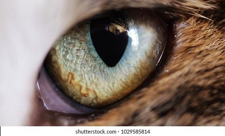 Close up macro cats eye iris, animal instincts