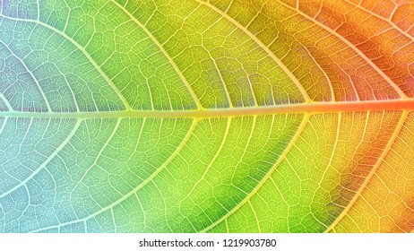 Close up macro of colorful leaf. Seasons nature concept image.