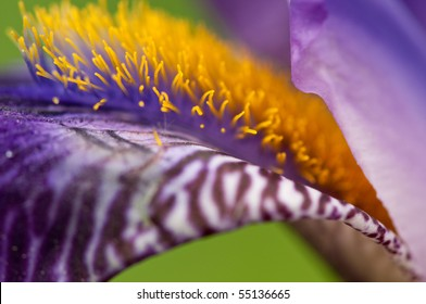 Close up macro of flower with copy space.