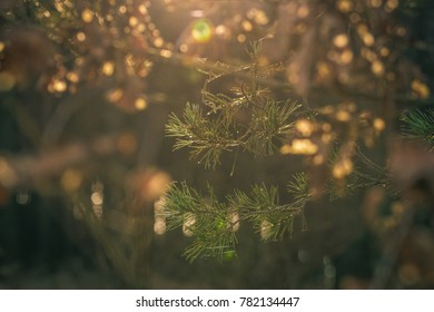 Close up macro forrest nature image against blurred background