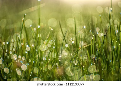 Close up macro image of bright light green grass growing on blurred green bokeh background on sunny morning
