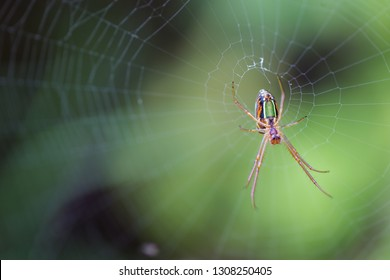 Close up macro image of an orb web spider on its web waiting for a prey insect.