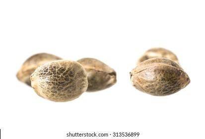 Close up macro photo of hemp seeds on white background