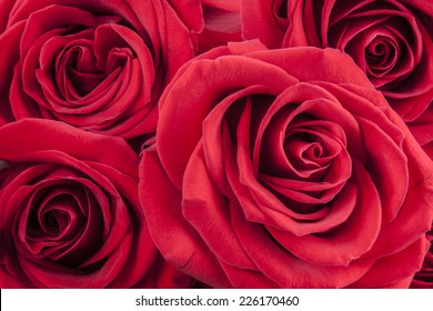 A close up macro shot of a beautiful red roses