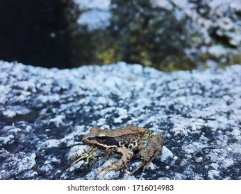 Close up macro shot of frog sitting on rock in profile at Peneda Geres national park in northern Portugal during the Summer. Shot on iPhone at Parque Nacional do Geres, Portugal