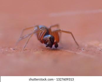 Pill Bug Hunter Images, Stock Photos & Vectors | Shutterstock