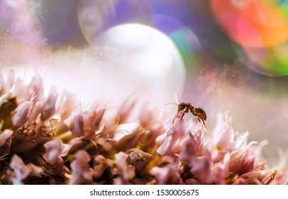 A close up macro of a sitting happy ant on a pink flower with beautiful magical fantasy abstract bokeh background with rainbow colourful and bright circles