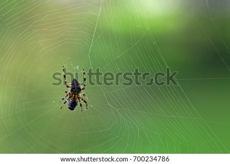 close-macro-spider-fresh-caught-450w-700