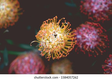 Close up macro of a spikey plant