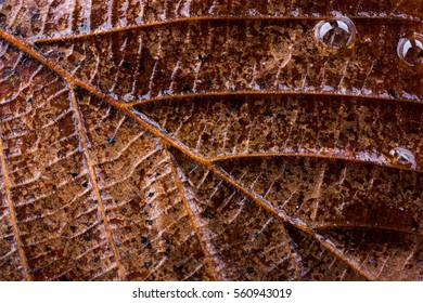 Close up macro view of a dry leaf of  autumn season