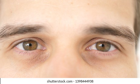 Close up of a male eyes. Detail of a brown eyes of a man looking at camera.