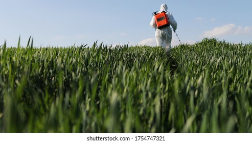 Close up of male farmer in white protective costume walking in greengrass in field and spraying pesticides with pulverizator. Man fumigating harvest with chemicals. Fumigate concept.