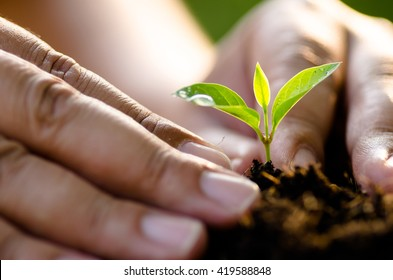 Close up Male hand planting young tree over green background
