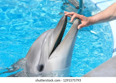 Close up man hand and dolphin