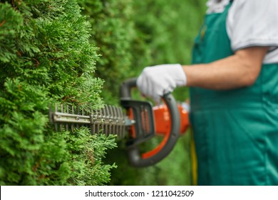 Close up of man hand with hedge trimmer cutting bushes of white cedar to ideal fence. Male gardener, wearing in overalls with protective glove working with professional garden equipment in backyard.