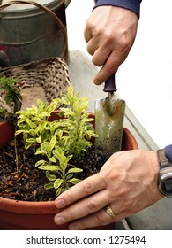 Close up of man potting a plant with gardening tools isolated on white
