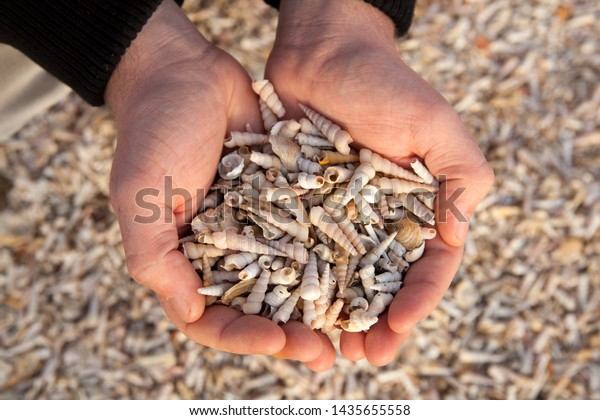 Close up of a man's hand full of different seashells