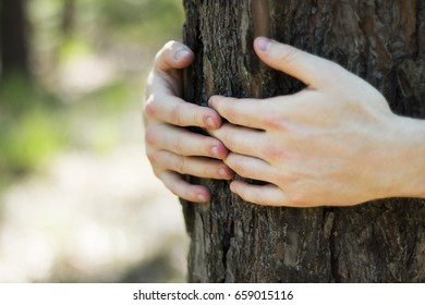Close up of a man's hands embracing tree with blurred forest in the background - environment protection concept