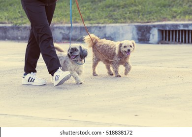 Close up of a man's legs and his white and puppy dog walking in park,animal and people concept